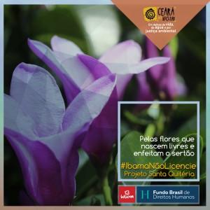 Banner_Flores